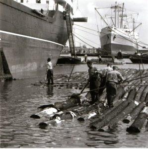 Vlotters in de haven.